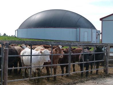 Ben Gardiner Farms